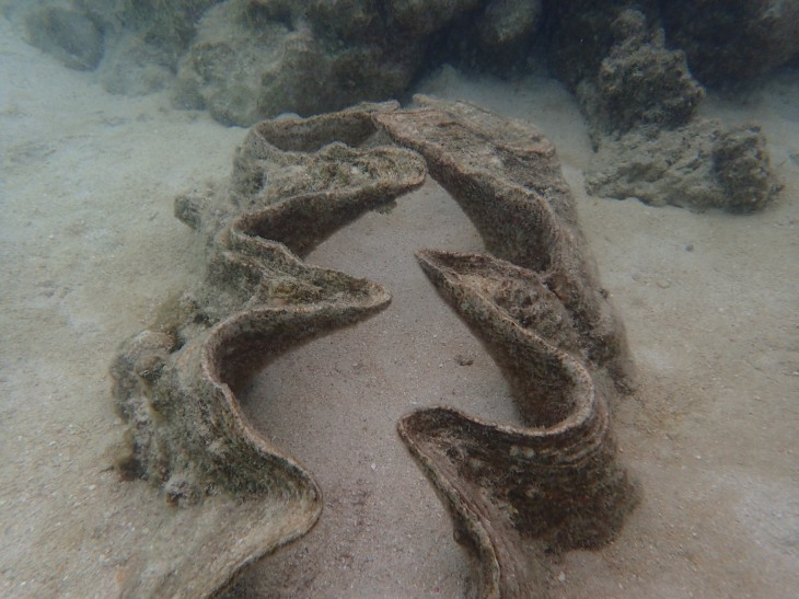 Giant Clam-The Great Barrier Reef 2-25-2017 Photographer:Gary Wagenblast
