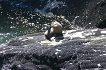 Seals-Milford Sound