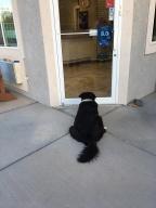 Sadie wants a room!