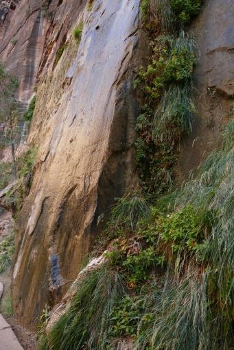 Ken's gold rock on the Riverside Walk